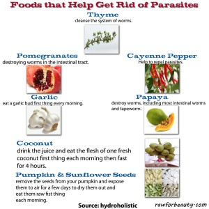 Foods to get rid of parasites - Austin Chiropractic - Dr. James Lee