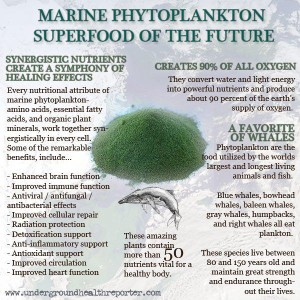 Phytoplankton - Austin Chiropractic - Dr. James Lee